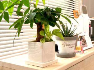 ネイルサロン店内観葉植物
